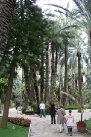 Elche: Palm capital of the world