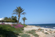 Santa Pola Beach with Palms & Flowers