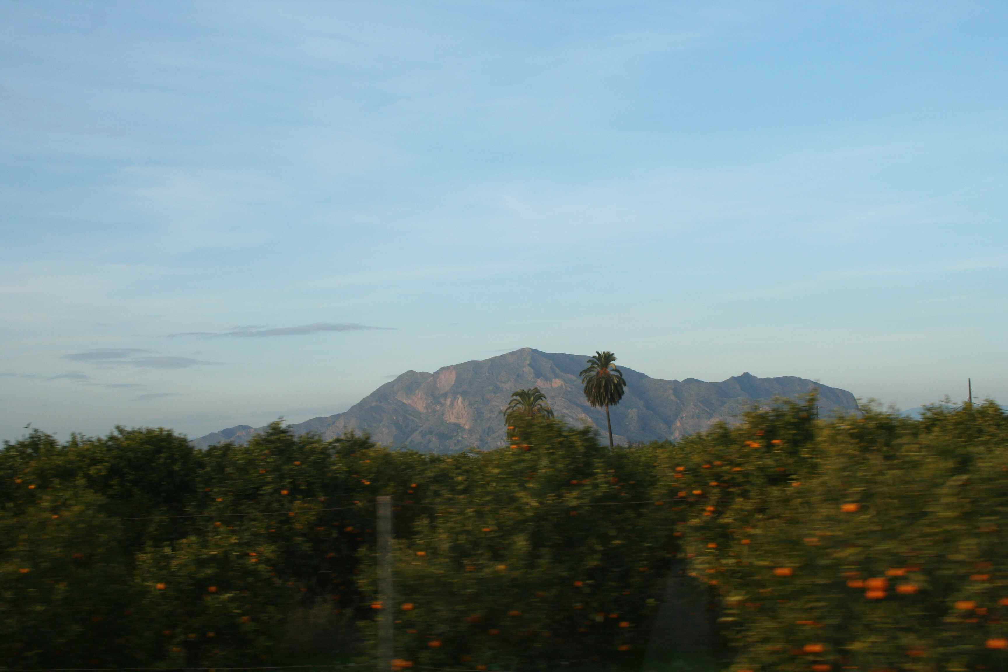 Orange & lemon groves abound around us. Enough of the coast? Head for the mountains...